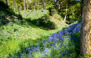 Bluebells at Newtown Golf Course 300x192 - Our Work