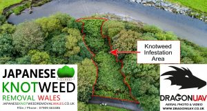 Article Cover 300x161 - Dragon UAV enters the battle against Japanese Knotweed